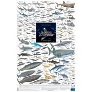 Sharks of the World, 3: Oceanic Depths