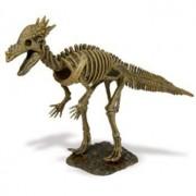 Dinosaur Skeleton Excavation Kit Specimen Institute Formic Moloch (Japan Import)