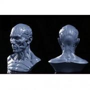 "ELECTROPRIME 4"" Human Model Anatomy Skull Head Muscle Bone Medical Artist Drawing Grey"