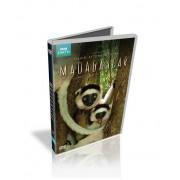 Madagascar - o fauna deosebita
