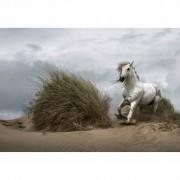 W + G Wizzard and Genius Fotobehang White wild horse