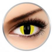 Phantasee Fancy Cheetara - lentile de contact colorate galbene pisica anuale 17 mm - 360 purtari (2 lentile/cutie)