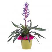 Interflora Planta de Viriesia Interflora