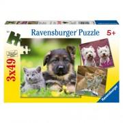 Puzzle caini si pisici, 3x49, RAVENSBURGER