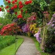 Arcada trandafiri de gradina din metal - Roza