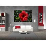 Tablou canvas floare rosie - cod A17
