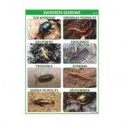 Zwierzęta glebowe cz. 1 - plansza dydaktyczna