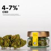 """CBD Blüten Gusenbauer """"Der Zuamacher"""" 30g (3dag) -30% RABATT"""