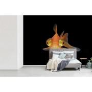 Fotobehang vinyl - Telescoop goudvis op een zwarte achtergrond breedte 320 cm x hoogte 240 cm - Foto print op behang (in 7 formaten beschikbaar)