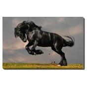 Tablou Canvas Black Wild Horse