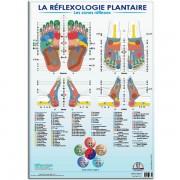 """Poster français Mireille MEUNIER """"La Réflexologie Plantaire"""" - Les zones réflexes"""
