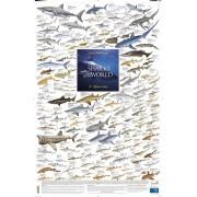 Sharks of the World, 2: Offshore Reefs