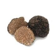 Trufe negre uncinatum (Tuber uncinatum Chatin)