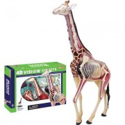 4D Vision 27 Piece Giraffe Anatomy Model Set