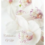 Celebration of Life, in Loving Memory Funeral Guest Book, Wake, Loss, Memorial Service, Love, Condolence Book, Funeral Home, Missing You, Church, Thou, Hardcover/Lollys Publishing