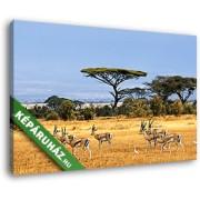 Legelésző antilopok (35x25 cm, Vászonkép )