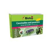 Biotop Larve de coccinelle à 2 points Coccifly