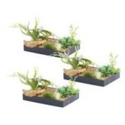 Carlo Milano 3 tableaux végétaux avec cadre - Herbacées - 30 x 20 cm