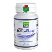 OKG Factor Base 60 tbl ( střeva, ekzém, alergie, imunita )