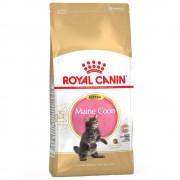 Royal Canin Breed Royal Canin Maine Coon Kitten - 4 kg Darmowa Dostawa od 89 zł