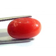 7.48 Ct Untreated Natural Premium Italian Red Coral AAA