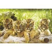 Tygrysiątka - plakat