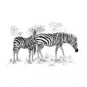 Set pentru realizarea unui desen in creion - Zebre