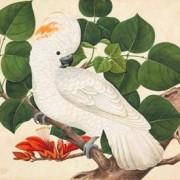 IXXI muurdecoratie Cockatoo-small (100 x 80 cm)
