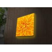 Tablou pe panza iluminat Ledda, 254LED4238, 40 x 40 cm, panza