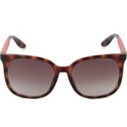 Carrera Wayfarer Sunglasses(Brown)