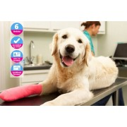 Holly and Hugo £12 for an ICOES-accedited online animal physical therapy course from Holly & Hugo!
