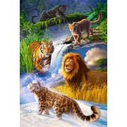 Puzzle Castorland - Big Cats, 1000 piese