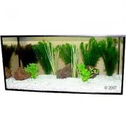 Aquariaplanten Zooplants Goudvis in het Water 9 Planten