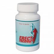Erect Recover - Kuur