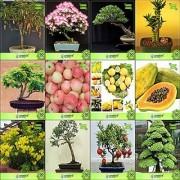 Bonsai Suitable Seeds : Seeds For Planting Combo Tamarind Albizia Lebbeck Eucalyptus Bamboo Gulmohar Apple Lemon Papaya Tecoma Stans Garden Seeds Pack By Creativefarmer