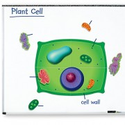 Learning Resources Magnetic Giant Plant Cell