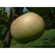 Măr Renet de Canada (Cormoş)