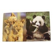 Staples Two Pocket Paper Folder ~ Set Of 2 Animal Cub Folders (Panda Snack Break, Lion Cub Brotherly Love)