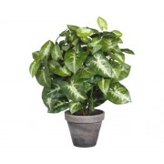 Planta artificiala, Fittonia, inaltime 35 cm, verde