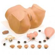 simulatore ginecologico - utero: neoplasie, carcinomi, iud e altri sce