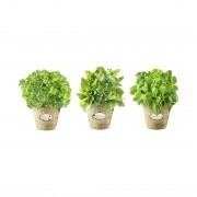 Wandafbeelding Herbs