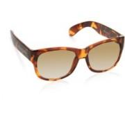 Flying Machine Round Sunglasses(Brown)