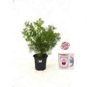 ES ASPARAGUS NATURAL PLANT With Gift Anniversary Gift Mug