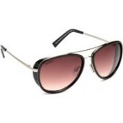 Joe Black Aviator Sunglasses(Brown)