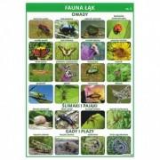 Fauna łąk cz. 1 - plansza dydaktyczna