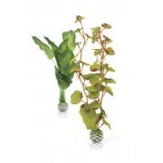 biOrb střední hedvábná rostlina set zelená