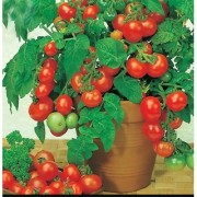 Seeds-Cherry Tomato
