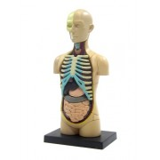 Skynet 4 D Vision Body Human Anatomy Model Puzzle No.01 Solid