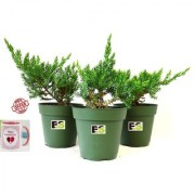 JONIPAR COMBO OF 3 PEICE NATURAL PLANT With Gift Anniversary Gift Mug