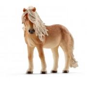 Iapa Icelandic Pony